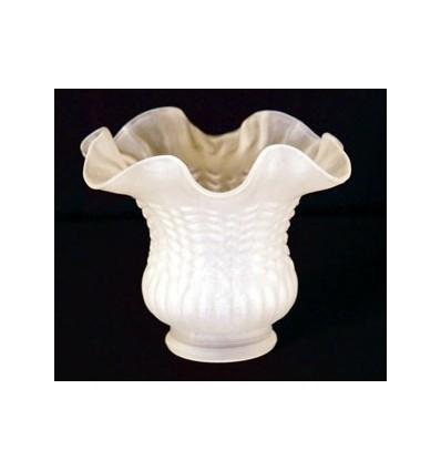 image: tulipa cristal rizo rayas
